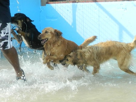 Image of Lucy's Doggy Daycare and Spa Downtown which provides dog boarding in or near San Antonio, TX