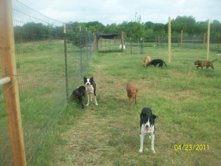 Image of Ruff Ranch Pet Boarding which provides dog boarding in or near Buda, TX