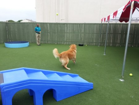 Image of Barking Lot Doggy Daycare & Resort which provides dog boarding in or near Carrollton, TX