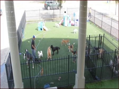 The dog house pet salon dog boarding houston for The dog house pet salon