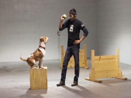 Aggressive Dog Breed List Chicago