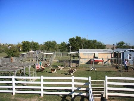 Image of Doggy Day Out Kennel & Daycare which provides dog boarding in or near Pflugerville, TX