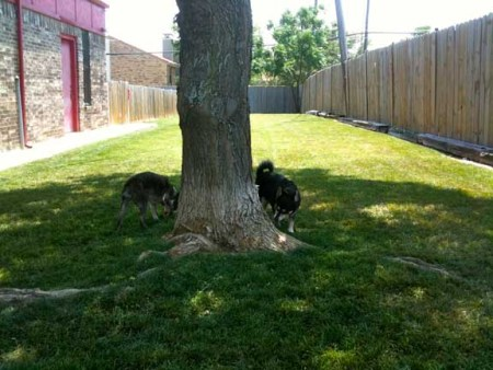 Image of Petite Pooch Chateau (Farmers Branch) which provides dog boarding in or near Dallas, TX